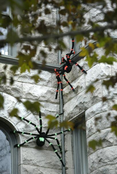 2. Arañas: Estos insectos a los que tanta gente les tiene miedo también...