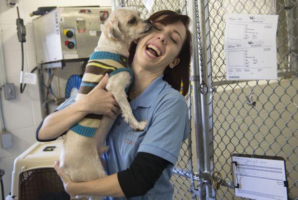 Kelly O'Meara, directora de animales de compañía de la HSI...