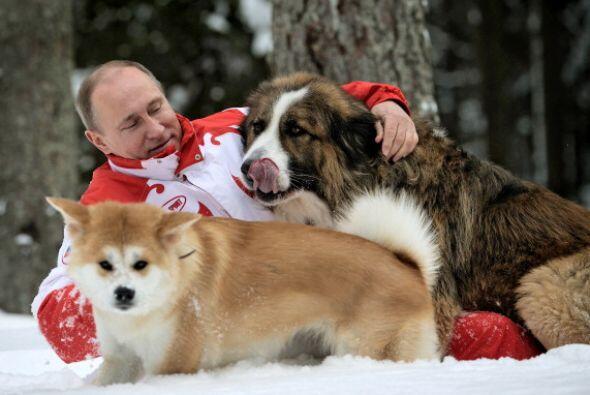Esta foto tomada en 2013 muestra a Vladimir Putin jugando con sus perros...