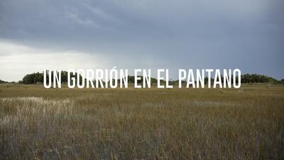 Un Gorrión en el Pantano: Cultura y extinción en el Río de Hierba  e9ab5...