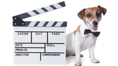 ¿Tu mascota tiene talento? Compártelo y hazla famosa en Despierta América