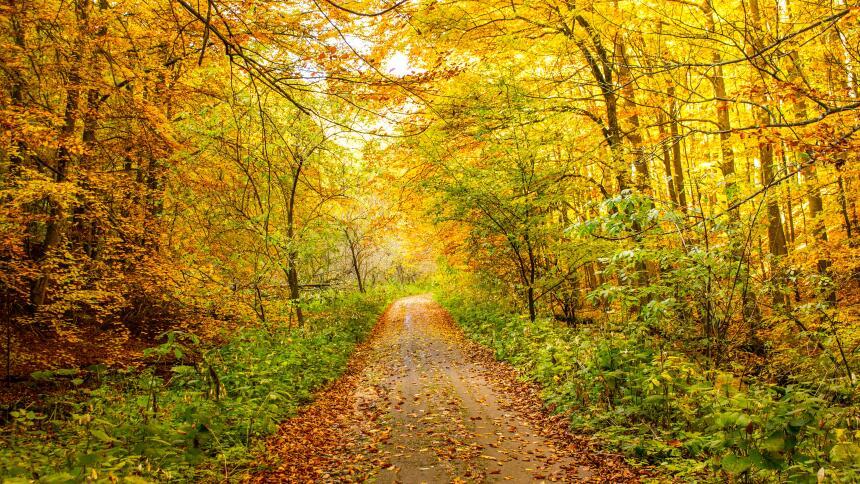 Cuando la mejor terapia es un paseo entre los árboles  michal-ico-412134...