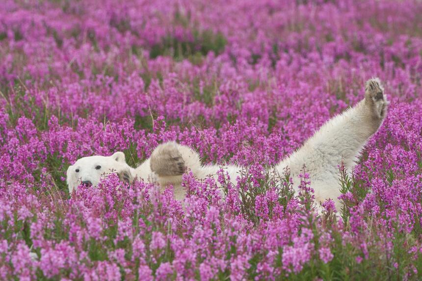 ¡Hora de relajarse en la cama de flores!