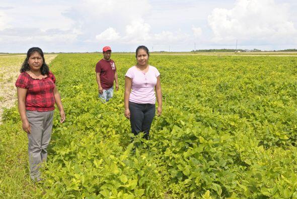 Según Garza, la deserción escolar entre los jóvenes campesinos del sur d...