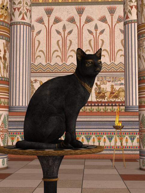 Conoce el misticismo del gato negro  12.jpg