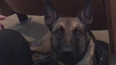 La ciudad de San Antonio inicia un proyecto para ayudar a perros sin dueño y veteranos discapacitados