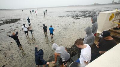En fotos: El mar se retira en Tampa Bay antes de la llegada de Irma