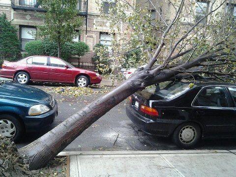 Fotos Usuarios Sandy