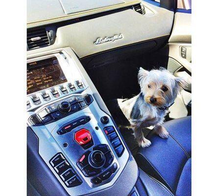 Los perritos posan dentro de sus autos deportivos.   Foto credito: Insta...
