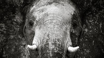 En fotos: El lado más salvaje de África retratado por una fotógrafa brasileña
