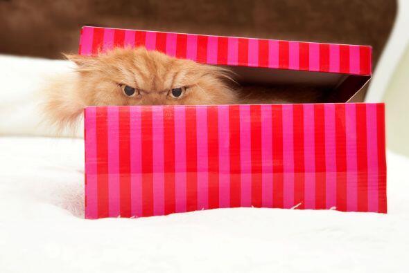 ¡Hay una criatura oscura en la caja!