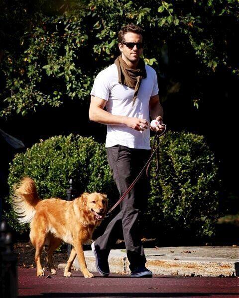 Ryan Reynolds y Baxter   Otro amante de los perros es el actor Ryan que...