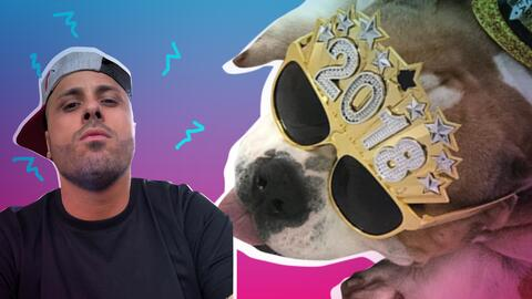 Mascotas reggaeton