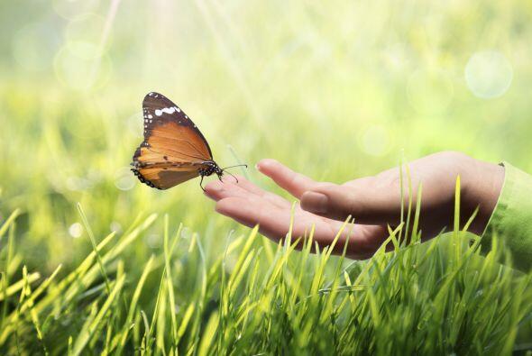 Nuestras manos son verdaderos transformadores de energía, la punta de lo...