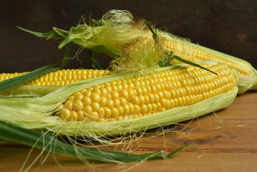 maíz - mazorca