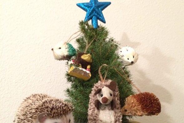 Cuando puede, ayuda a colgar los adornos del árbol de navidad.