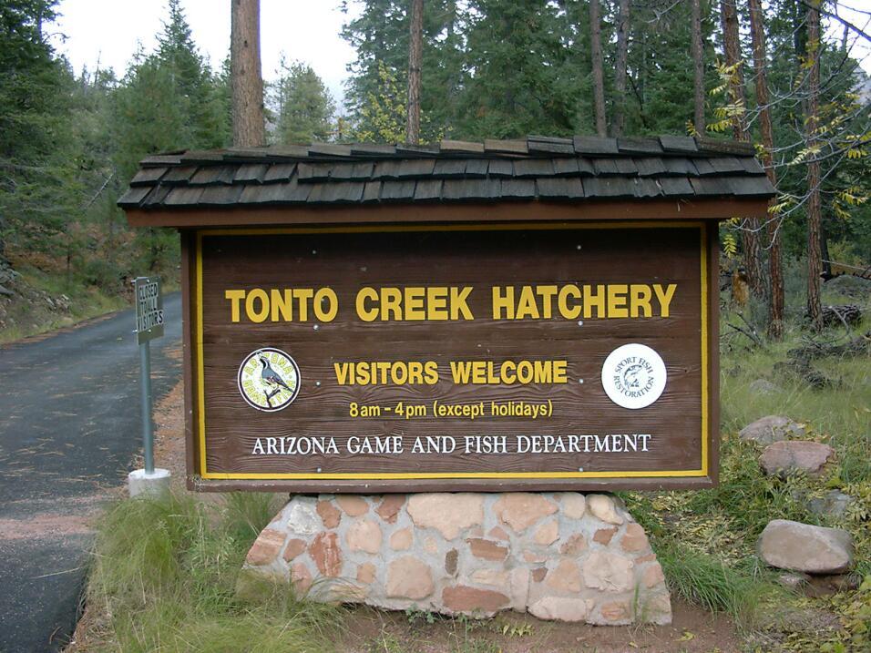 Criadero de Truchas en Tonto Creek