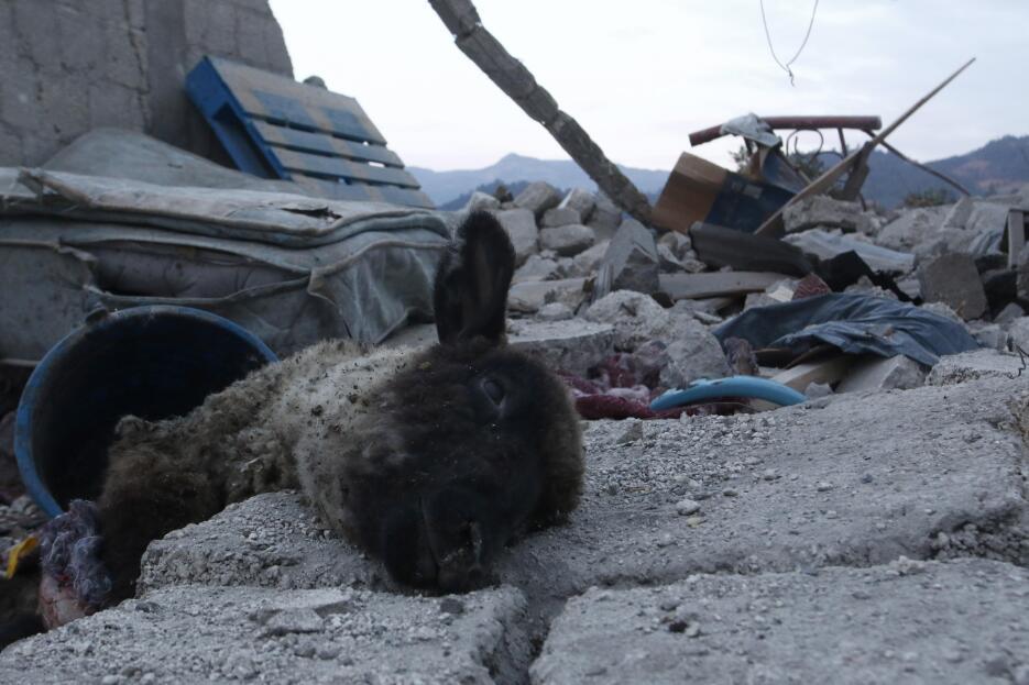 Un animal muerto entre los escombros que dejó el estallido