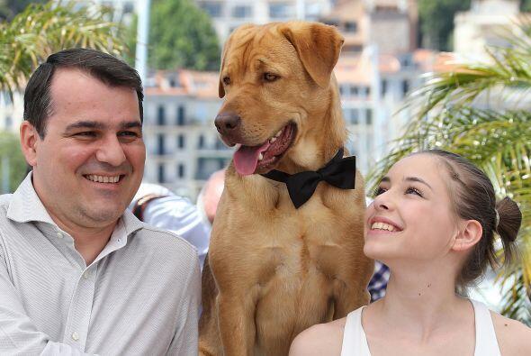 ¡Es la primera vez que un perro en un filme recibe este reconocimi...
