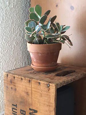 El recipiente ideal. Si prefieres tener cactus y suculentas en tamaño pe...