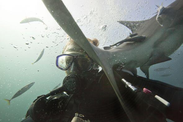 Este fotógrafo comprobó que los tiburones no son peligrosos.