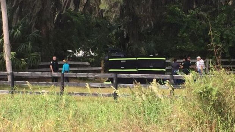 FL: Desmembran otro caballo para posible venta de carne