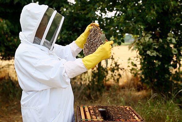 Muchos creen que existe algo en el veneno de las abejas que apacigua el...