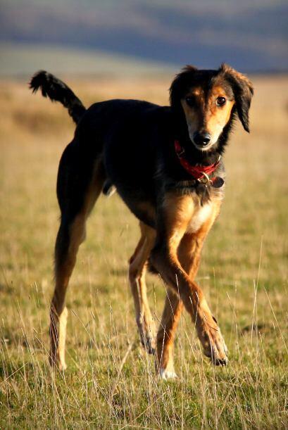 Ahora el perro pasea por todo el campo y tiene todos cuidados que se mer...