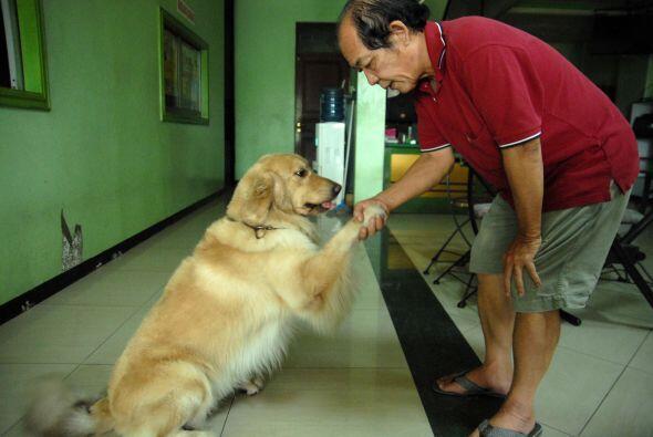 Ambos perros también están contentos cuando comen con su d...