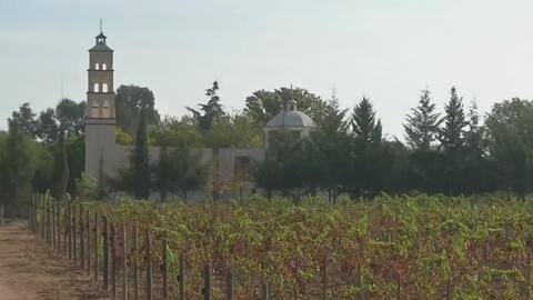 Conozca el viñedo mexicano que produce las mejores cosechas de vino en e...