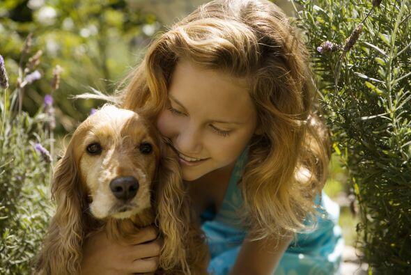Mira las razas de perros más cariñosas