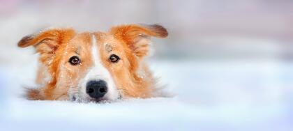 10 consejos para ayudar a los animales a resistir el frío istock-1651624...