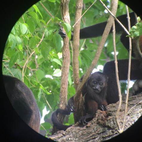 Salma Hayek en Costa Rica mono huevón