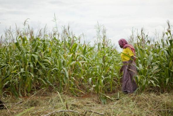 Los cultivos de Sharifa Idd Mumbi han incrementado dramáticamente su ren...