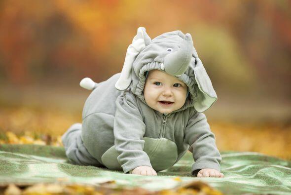 Los elefantitos son, din duda, lo más adorable.