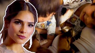 Esto es lo que pasó después de que el perro de Alejandra Espinoza mordió a su hijo