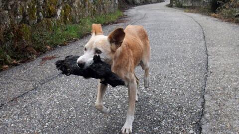 La imagen de una perra cargando a su cría carbonizada.