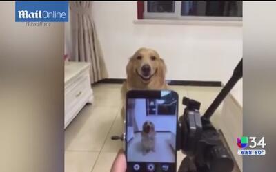 ¡Dior, el perro que sonríe para las cámaras!