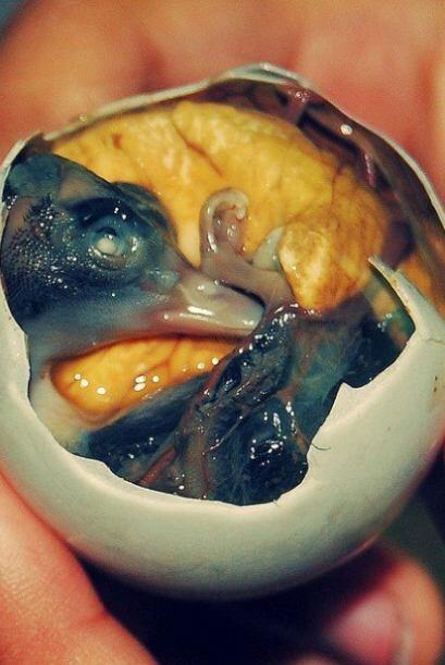 Te comerias un embrión vivo hervido dentro del huevo acompañado con una...