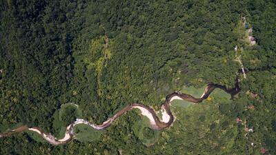 El cambio climático amenaza con transformar los bosques de Brasil en sabanas