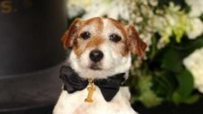 Uggie, el famoso perro de la película 'El Artista' asistirá a una cena e...