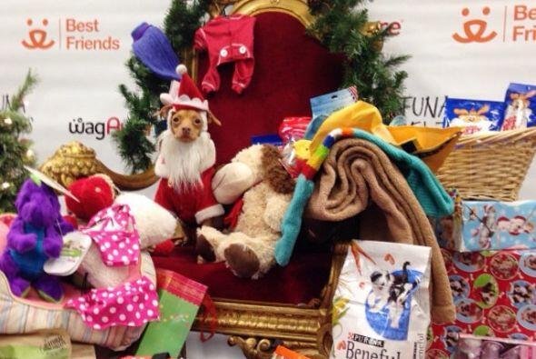 Esta navidad Tuna quiso ser Santa y dar muchos regalos.