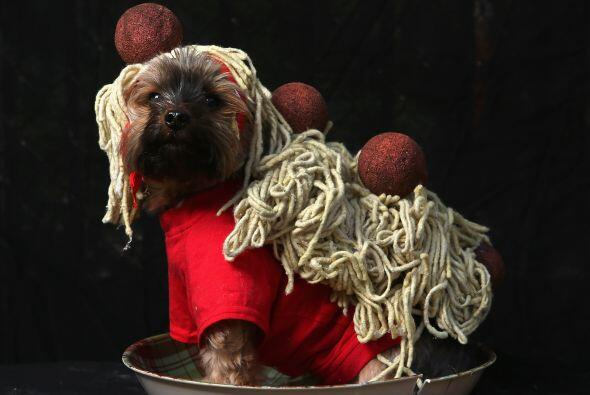 Que tal este espagueti a la boloñesa, seguro tu mascota no pasar&...