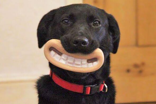 Este perrito tiene la sonrisa chueca más linda de su vecindario.
