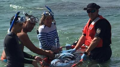 DRNA rescata a cría de Manatí en Isabela
