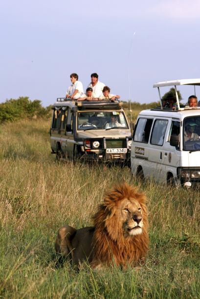El atractivo de un safari en Parque Kurger es casi incomparable con cual...