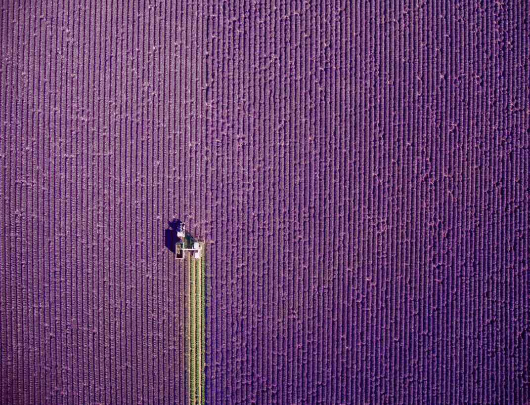 valensole, Provence, France by Jcourtial.jpg