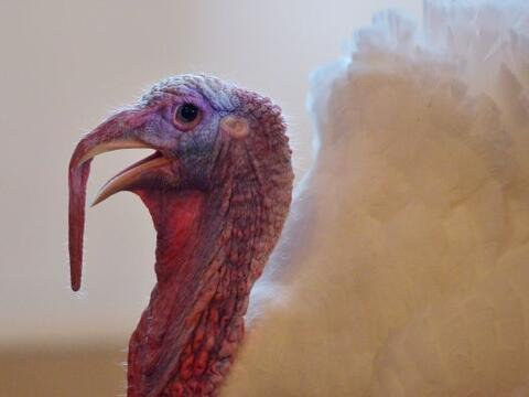 Thanksgiving es tiempo de agradecimientos, por eso le damos a algunos de...