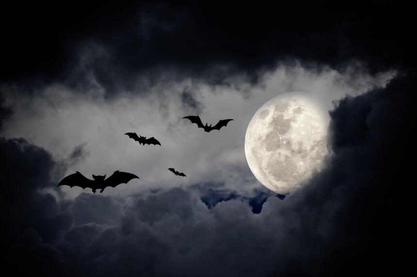 Conoce los vampiros dentro de la mitología mexicana  11.jpg