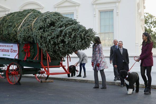 El año anterior incluyó alrededor de 24 árboles y m...